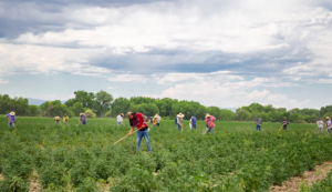 This Year Labor Day has a New Meaning for Colorado FarmWorkers